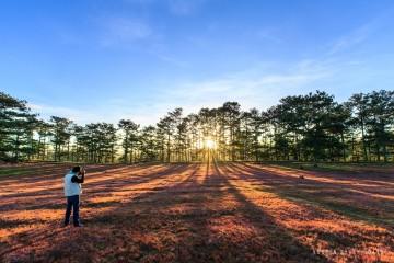 Đà Lạt lập Đông với những đồi cỏ hồng đẹp như thiên đường hạ giới