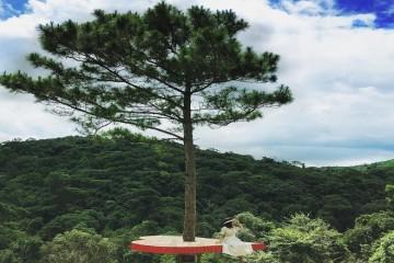 Thiên hạ rần rần check  - in cây thông cô đơn với trái tim lơ lửng ở Đà Lạt