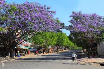 4 mùa hoa gợi nhớ về thành phố mộng mơ Đà Lạt