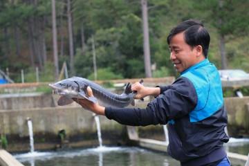 Người nuôi cá Tầm Lâm Đồng lao đao vì cá nhập lậu từ Trung Quốc