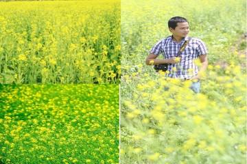 Xuất hiện cánh đồng hoa Cải vàng khổng lồ ở Đà Lạt