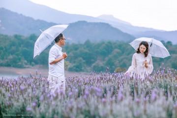 Cánh đồng hoa Lavender rực rỡ trong tháng 5 ở Đà Lạt