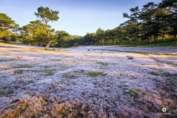 Tour khám phá cánh đồng cỏ Tuyết Đà Lạt