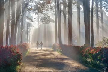 Nỗi nhớ về những sớm mờ sương Đà Lạt
