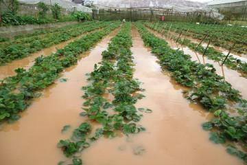 Nhà vườn Đà Lạt ngập sâu sau cơn mưa lớn những ngày qua