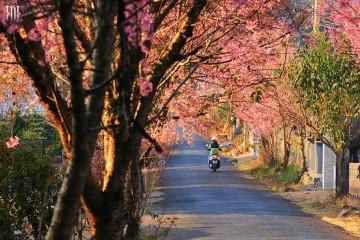 Du lịch Đà Lạt mùa xuân, bạn có thể thưởng ngoạn những gì?