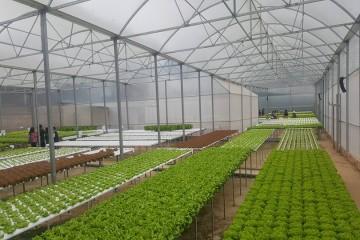 Người dân trồng rau Đà Lạt điêu đứng khi Trung Quốc đội lốt rau Đà Lạt