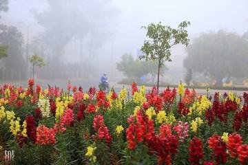 Mùa xuân, về Đà Lạt săn hoa trên muôn nẻo