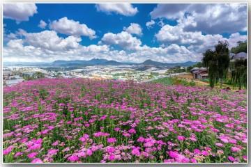 Đà Lạt đẹp rạng ngời qua 4 mùa hoa