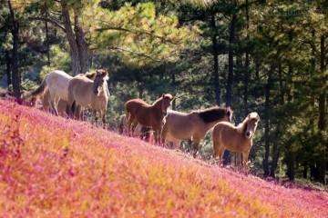 Đừng quên cuộc hẹn với Mùa hội cỏ hồng được tổ chức vào mùa đông năm nay tại Đà Lạt nhé.