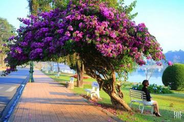 65 Địa điểm du lịch Đà Lạt hấp dẫn nhất