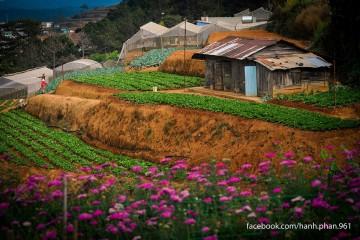 """Những mùa hoa """"say lòng"""" du khách của phố núi thân thương"""