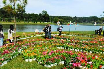 Festival hoa Đà Lạt 2017 và lễ hội văn hóa trà Bảo Lộc được tổ chức cùng thời điểm