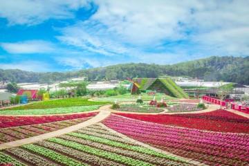 """Fresh Đà Lạt - """"Đồi hoa vạn sắc"""" của phố núi mộng mơ"""