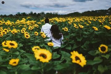 Địa chỉ cánh đồng hoa Hướng Dương Đà Lạt đang gây sốt giới trẻ
