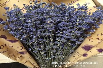 Hoa Lavender khô Đà Lạt