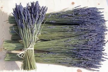 Chuyên cung cấp sỉ và lẻ hoa Lavender khô Đà Lạt