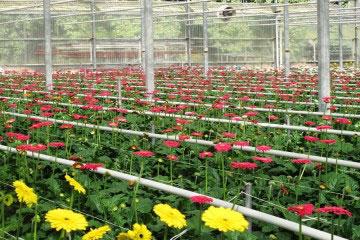 Chàng trai Nhật Bản bỏ phố lên rừng mở trang trại hoa tại Đà Lạt
