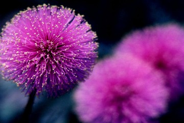 Những loài hoa tượng trưng cho tính cách 12 con giáp