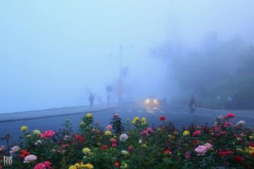 Đà Lạt tháng 12 - Đông về bên hiên cửa, gọi đến những mùa hoa