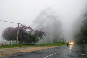 Mơ màng những cơn mưa Đà Lạt tháng 5