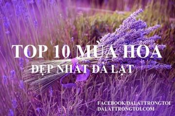 Top 10 mùa hoa đẹp nhất Đà Lạt