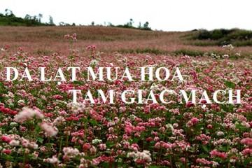 Vườn hoa Tam Giác Mạch đang nở rộ ở Đà Lạt