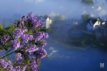 Phượng tím - Thu cả vẻ đẹp của thành phố vào sắc hoa