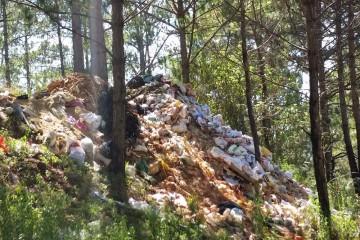 Rác thải gây ô nhiễm nguồn nước sinh hoạt của thành phố Đà Lạt
