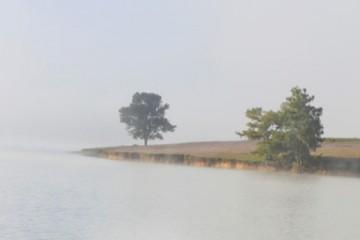 Nam du khách tự tử tại cây thông cô đơn Đà Lạt