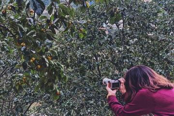Cô gái bỏ Sài Gòn lên Đà Lạt chăm vườn hồng truyền thống hơn 30 năm