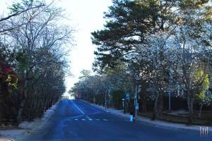 Đà Lạt mùa hoa Ban trắng