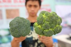 Phân biệt nông sản Đà Lạt và nông sản Trung Quốc