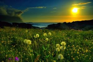 Sự tích hoa Bồ Công Anh