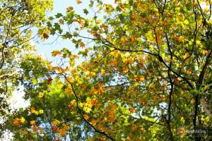 Một ngày khám phá rừng lá Phong rực rỡ sắc màu tại Đà Lạt