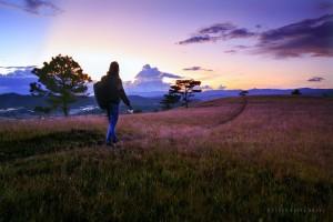 Đà Lạt lãng mạn với những đồi cỏ Hồng