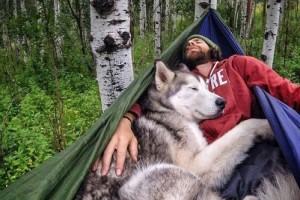 Chú chó Husky du lịch vòng quanh nước Mỹ cùng chủ nhân của nó