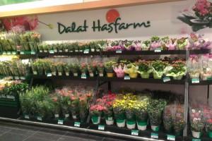 Người làm rạng danh cho nghề trồng hoa Đà Lạt