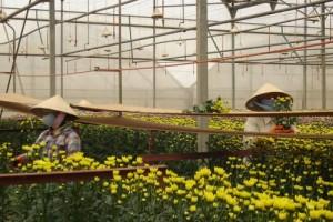 Những làng hoa nổi tiếng nhất Đà Lạt
