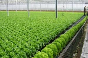 Đà Lạt thành phố của nông nghiệp công nghệ cao