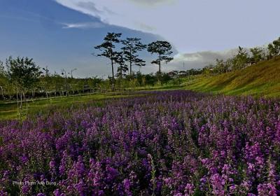 Đà Lạt - Những khung trời hoa bướm ngày xưa, lưu luyến lòng Du Khách